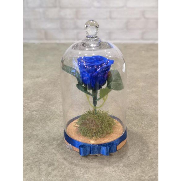 Örökrózsa üvegbúrában kék
