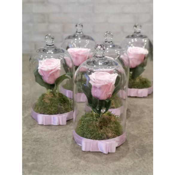 Örökrózsa búrában rózsaszín